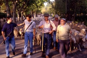 Fiesta de la Trashumancia 1997. Trashumancia y Naturaleza